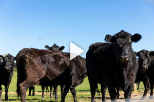 Transforming low-value meat cuts into premium export products.